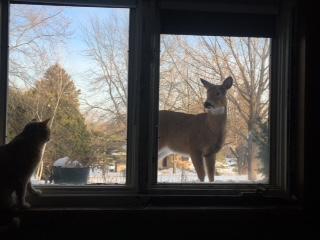 deer and cat links