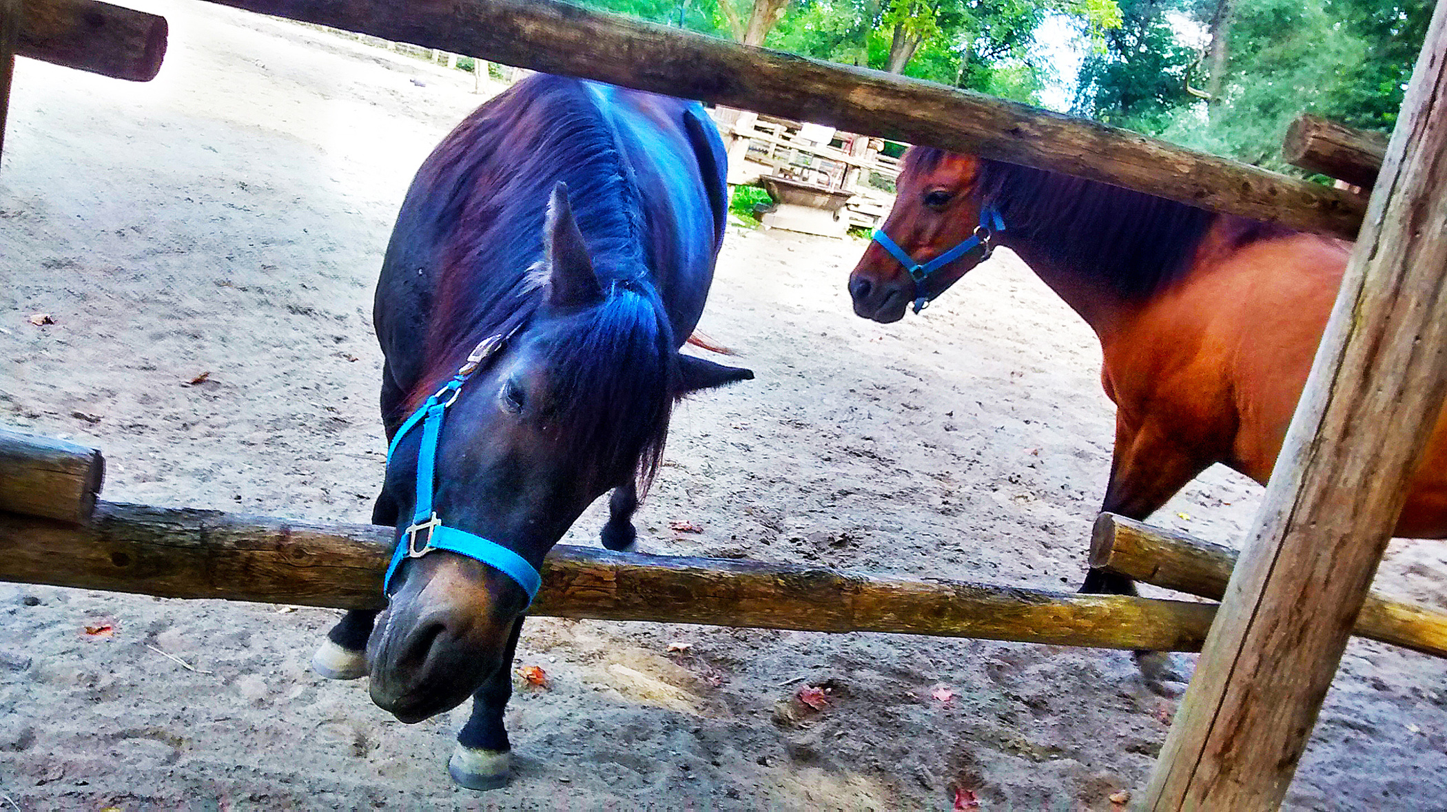 horses links
