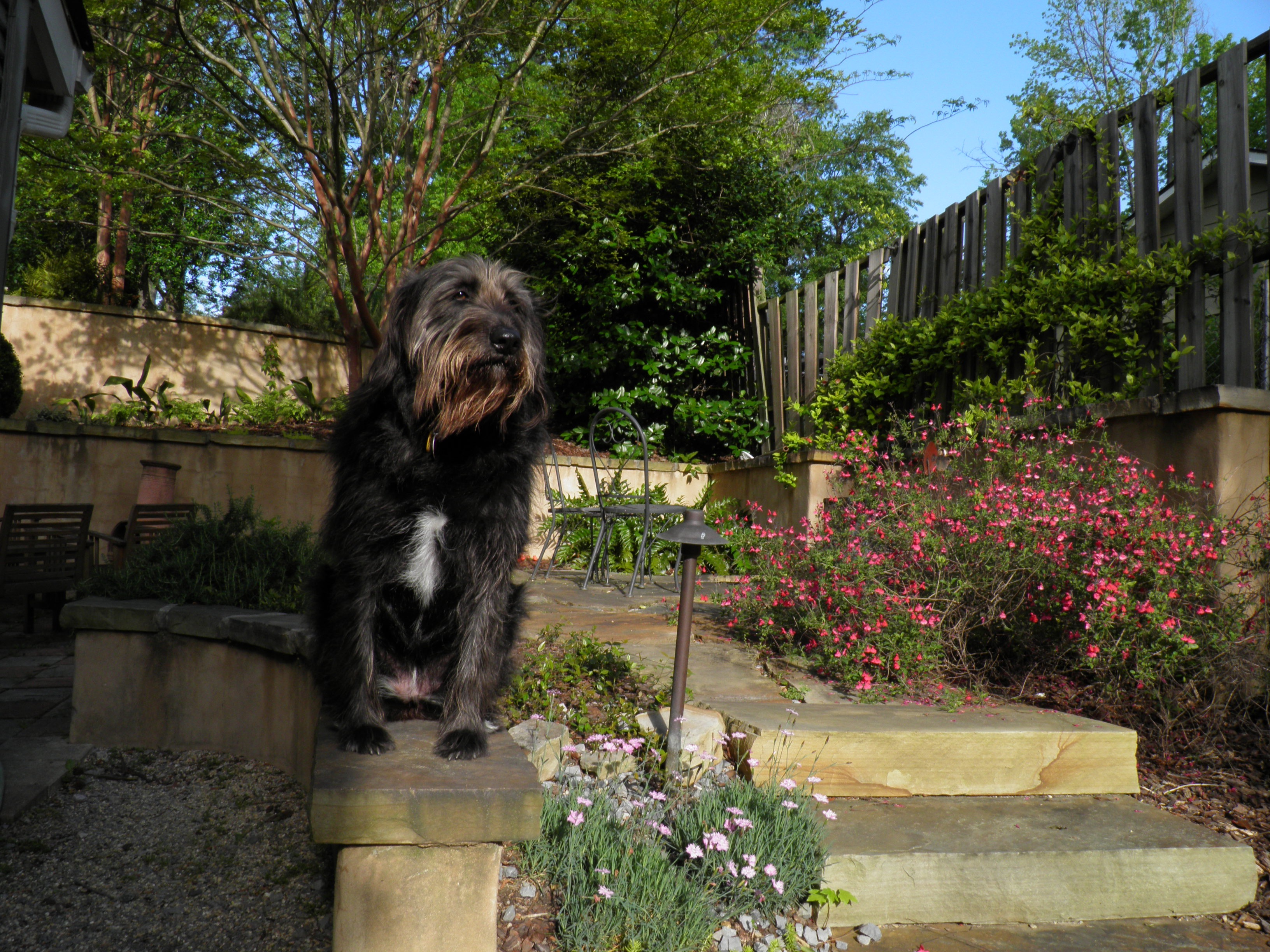 Lucy_garden links