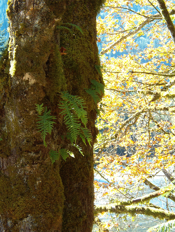 Wenatchee National Forest October 2010