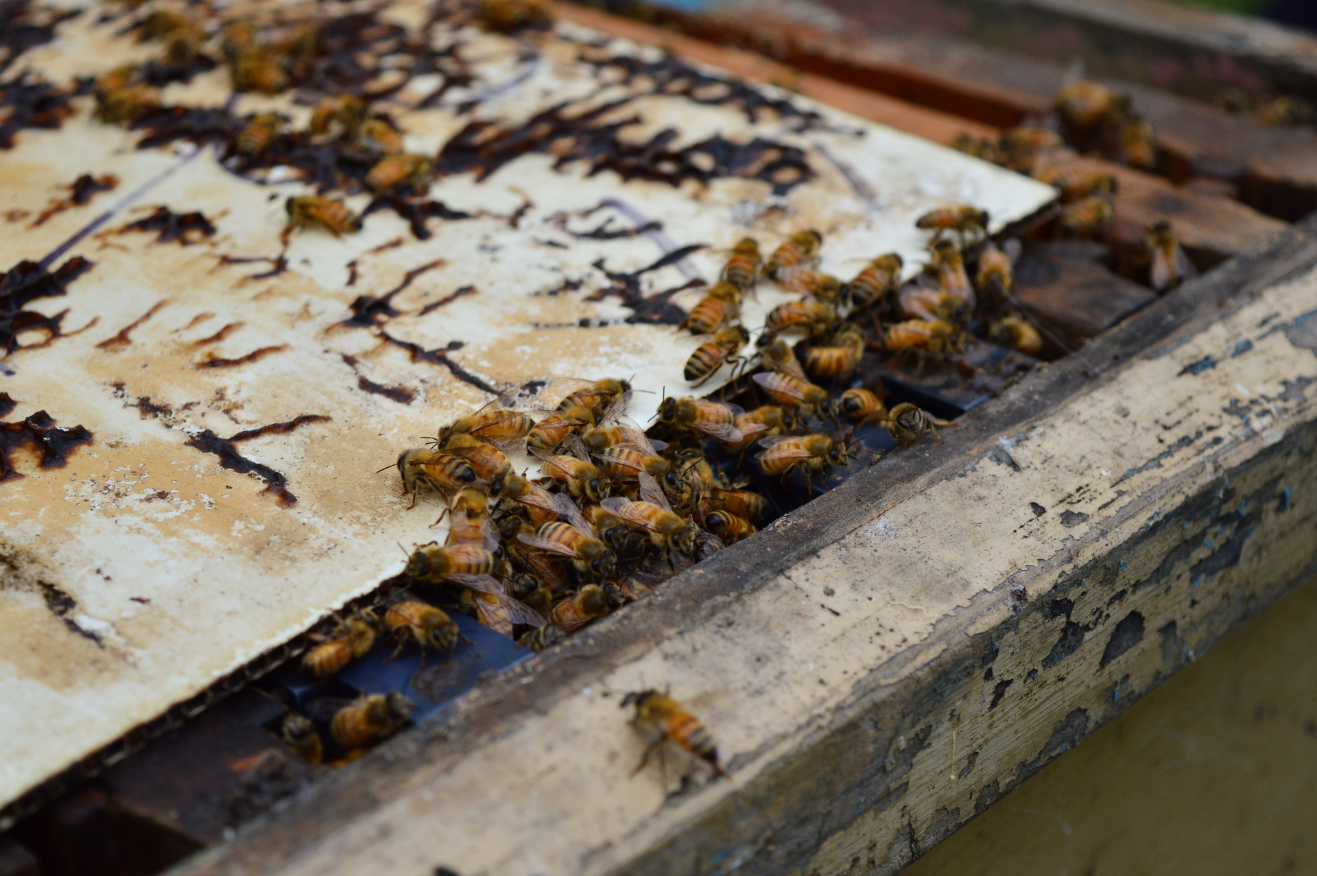 bees at work links