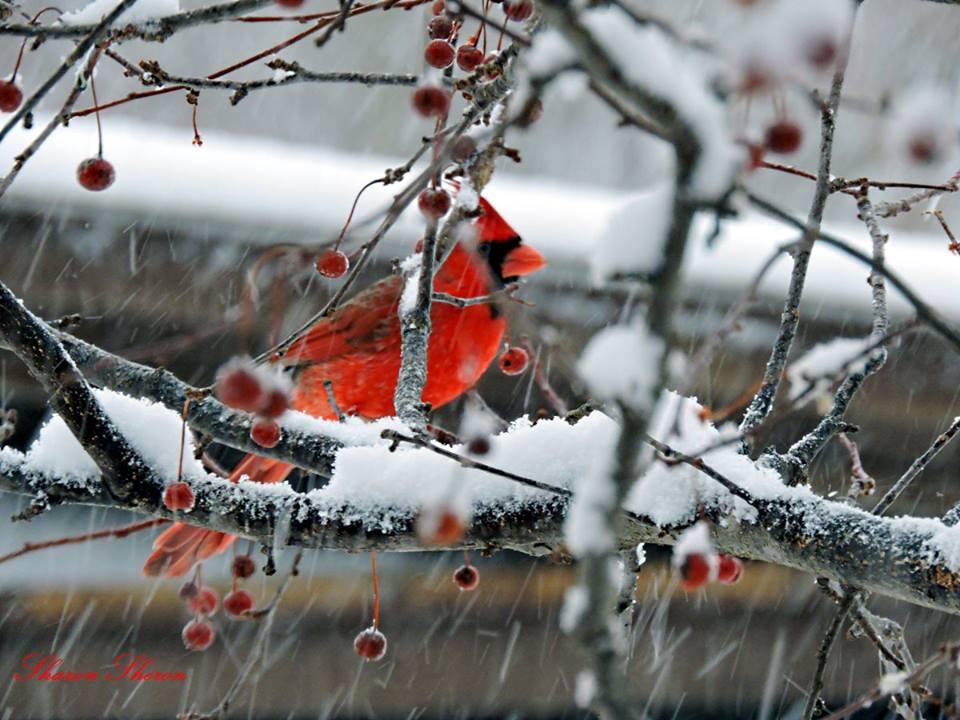 cardinal links