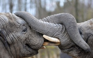POTD-elephant_3601496k