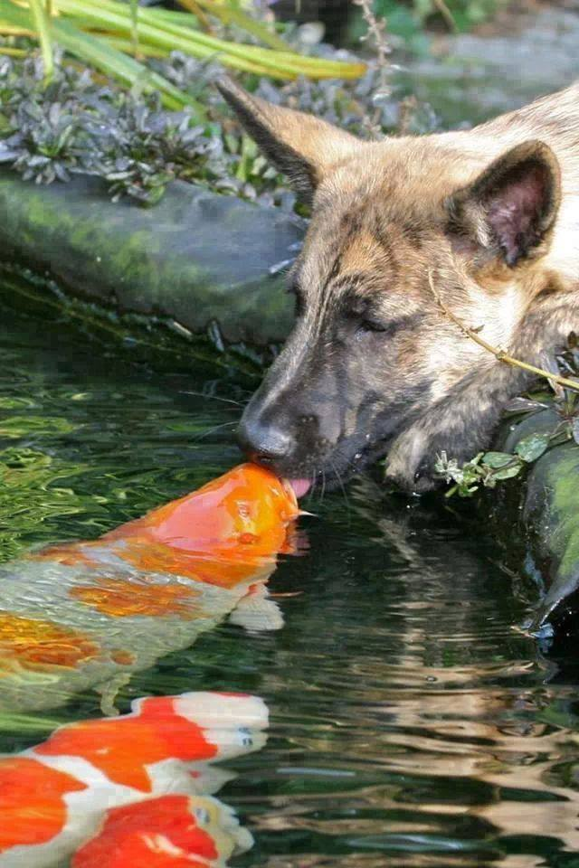 dog and carp links