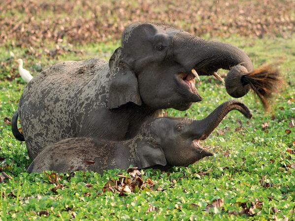 elephant_and_calf