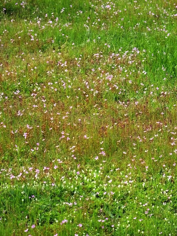 flower-carpet
