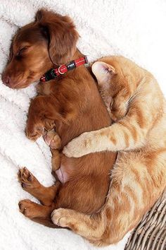 puppy and cat links
