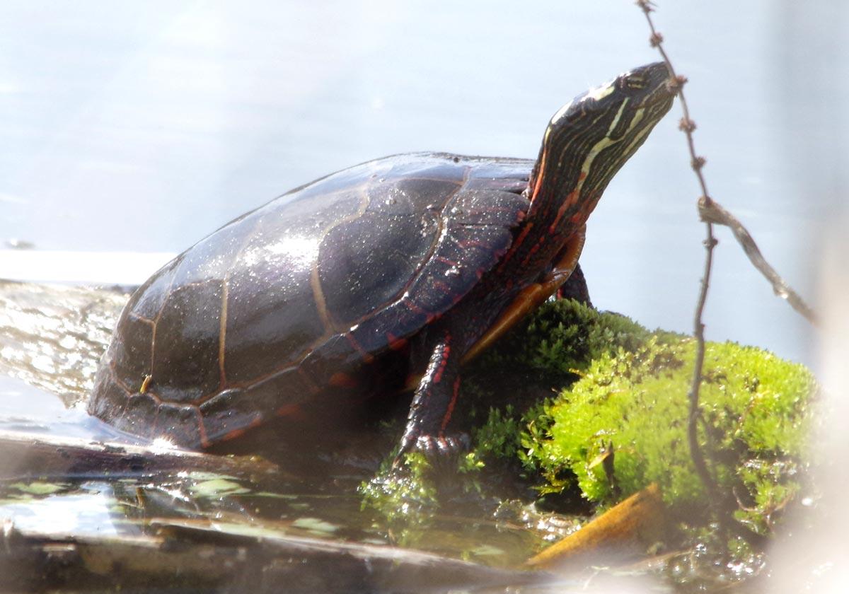 turtle-24mar16 links