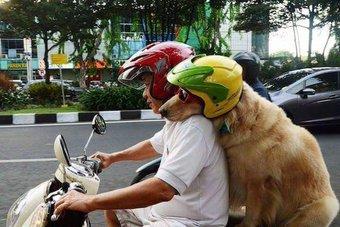 dog on motorbike lnks