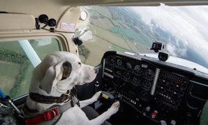 dog_plane_300