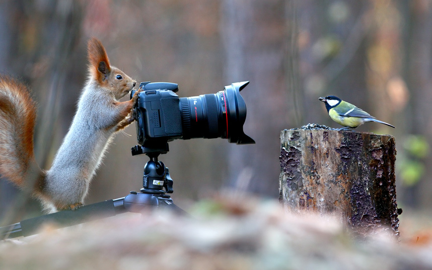 squirrel photographer ilnks