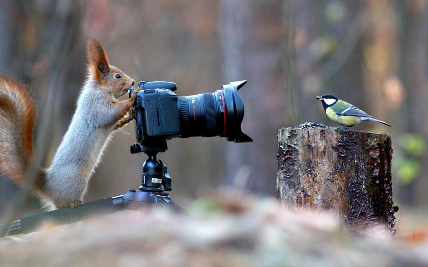 squirrel photographer ilnks