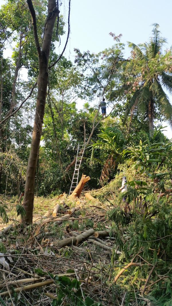 thailand_pruning