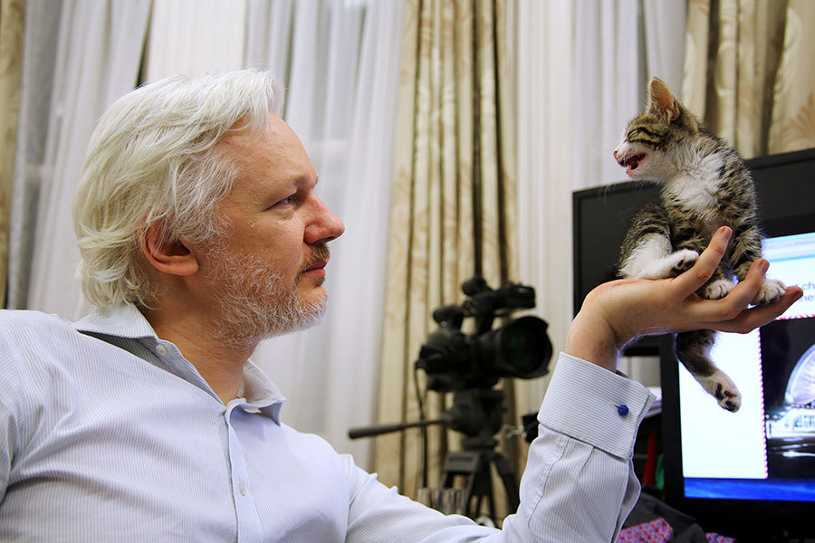 Assange with kitten links