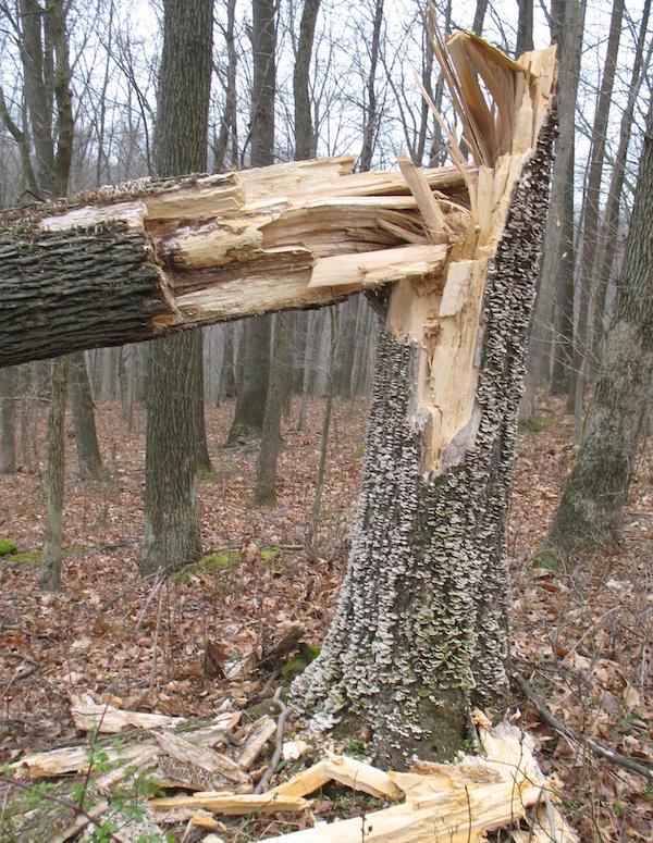 tree_down_stump