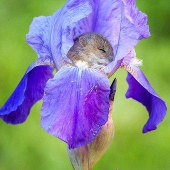 vole in flower links