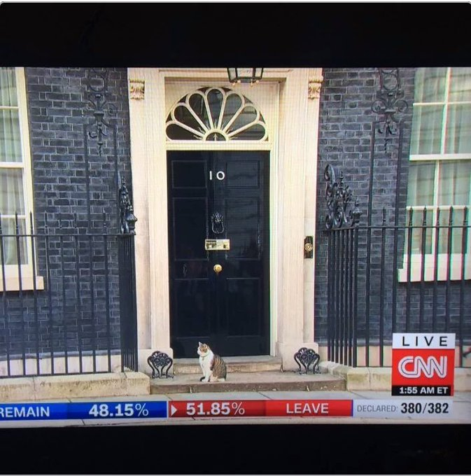 10 Downing cat links