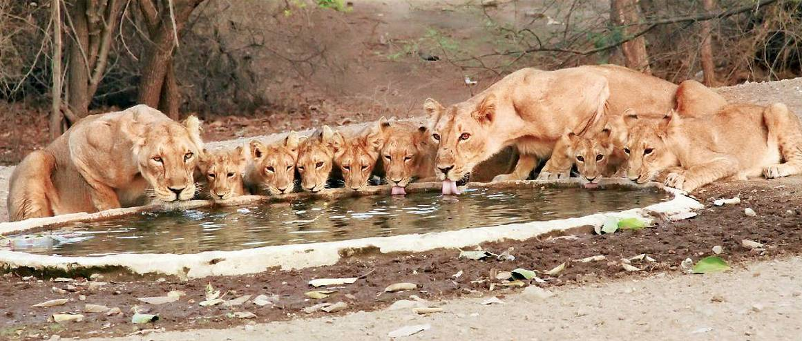 7 Lions links