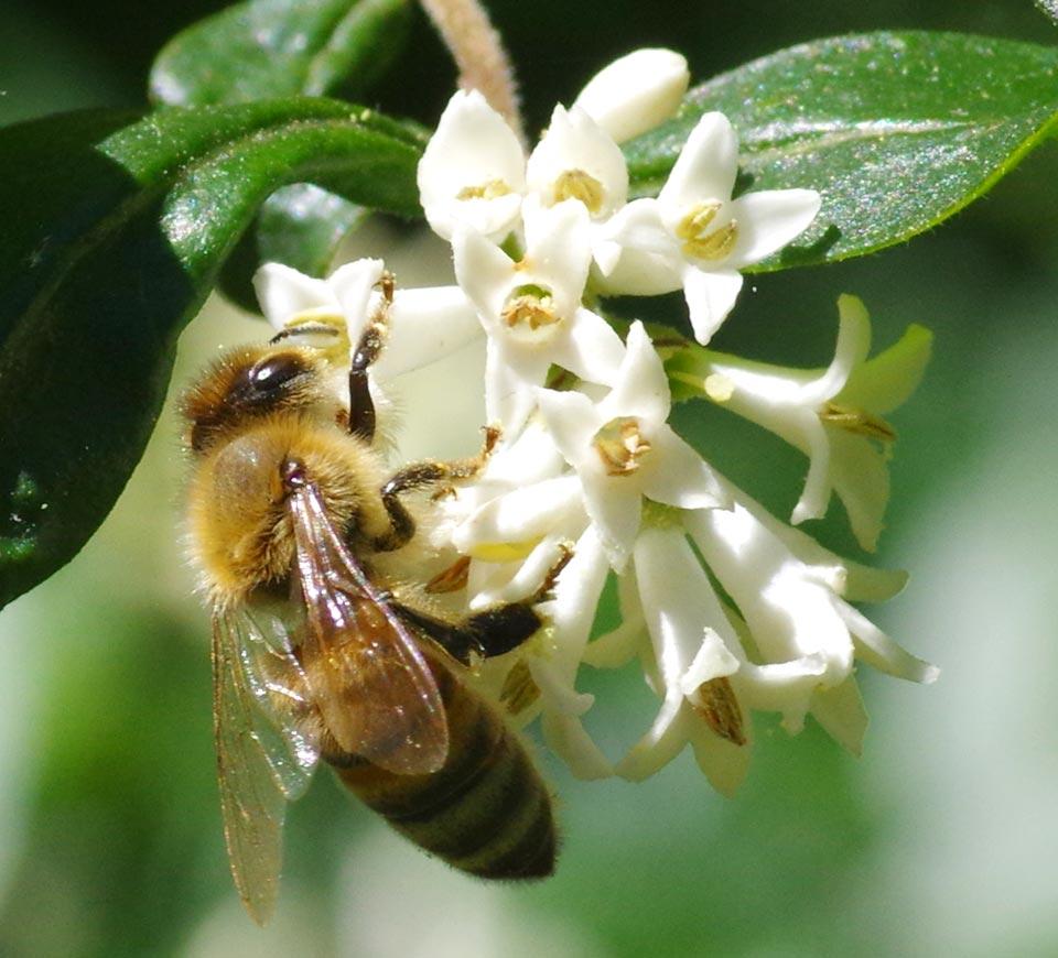 a8930-honeybee links