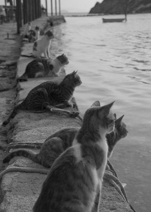 cats waiting for fishermen links