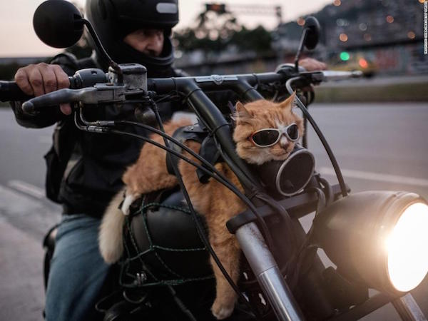"""rio_cat - """"Whither thou goest, I will go...""""  - Photos Unlimited"""
