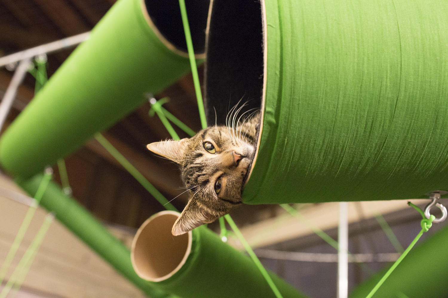 cats in residence links