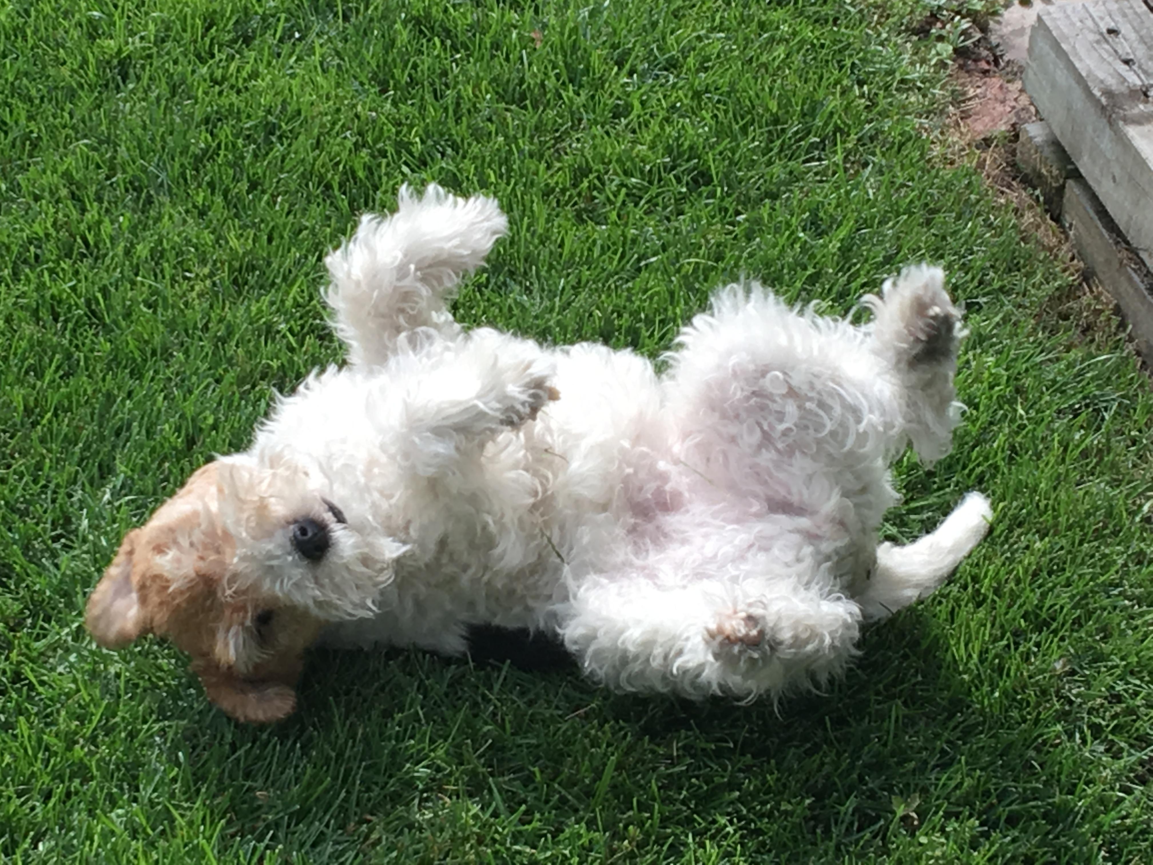 cute terrier links