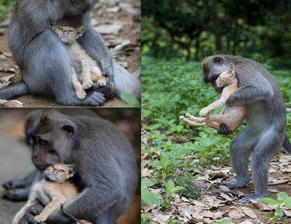 monkey forest kitten links