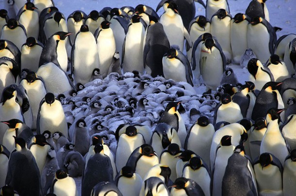 penguin huddle links
