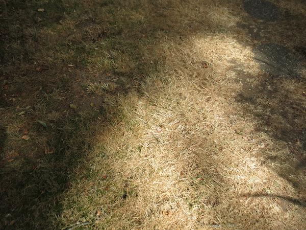 August Lawn