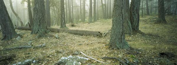The-Path-3