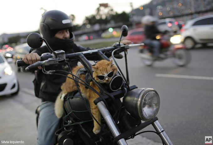 biker cat links