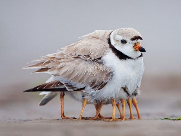 birdes links