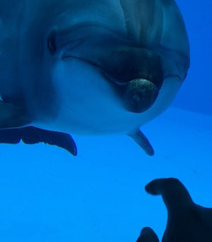 dolphin_300