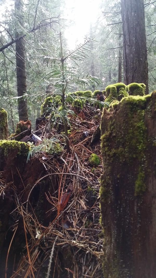 stump_mushrooms