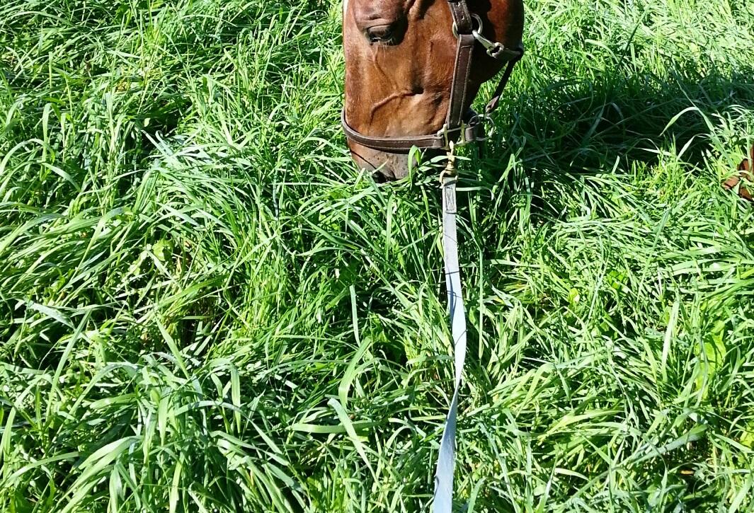 summer grass 2. links