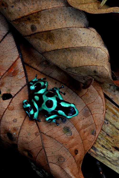 beautiful-frog-links