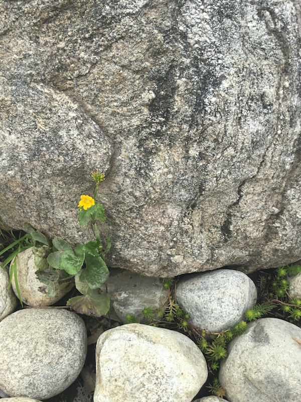 flower_and_rock