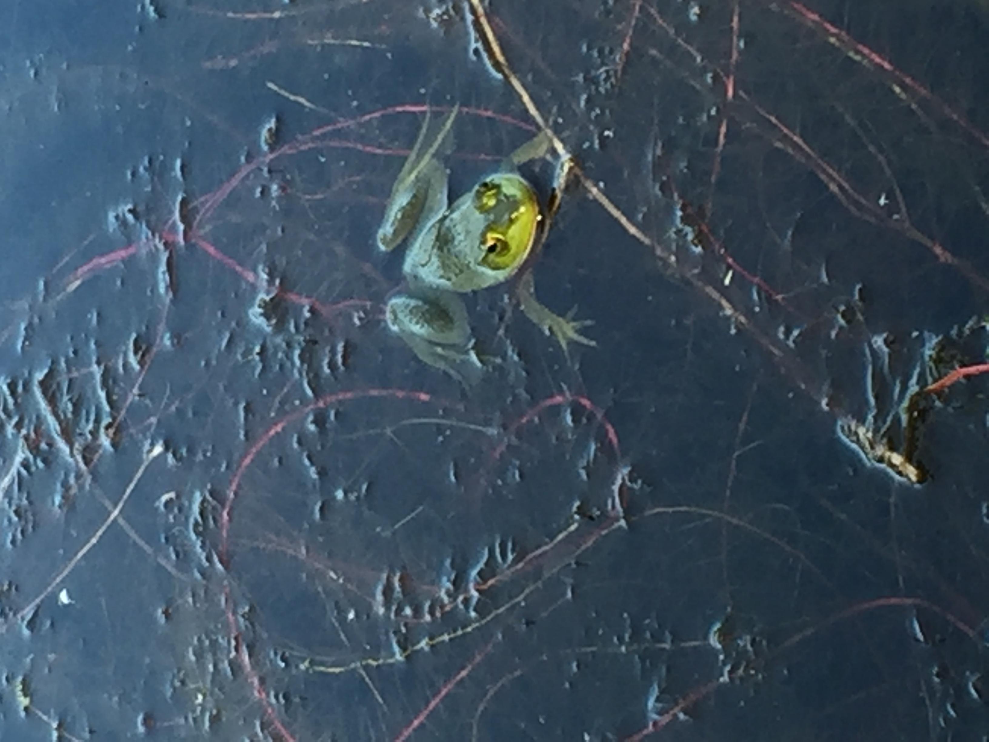 frog-links