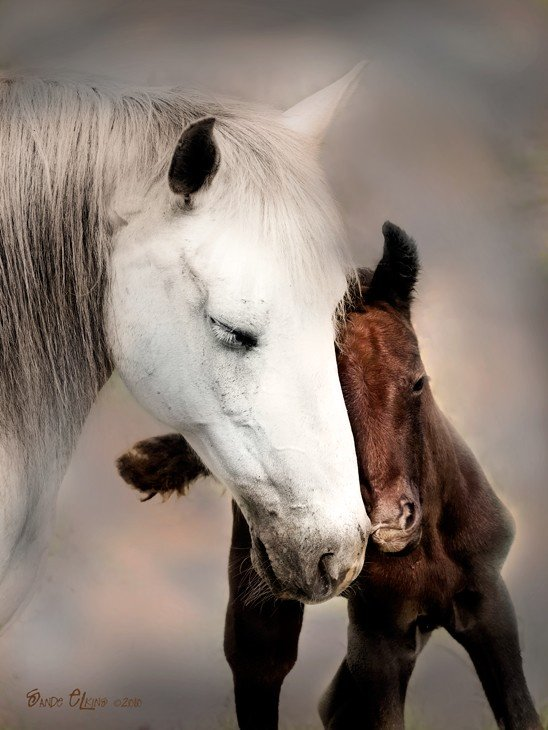 horse-and-foal-links