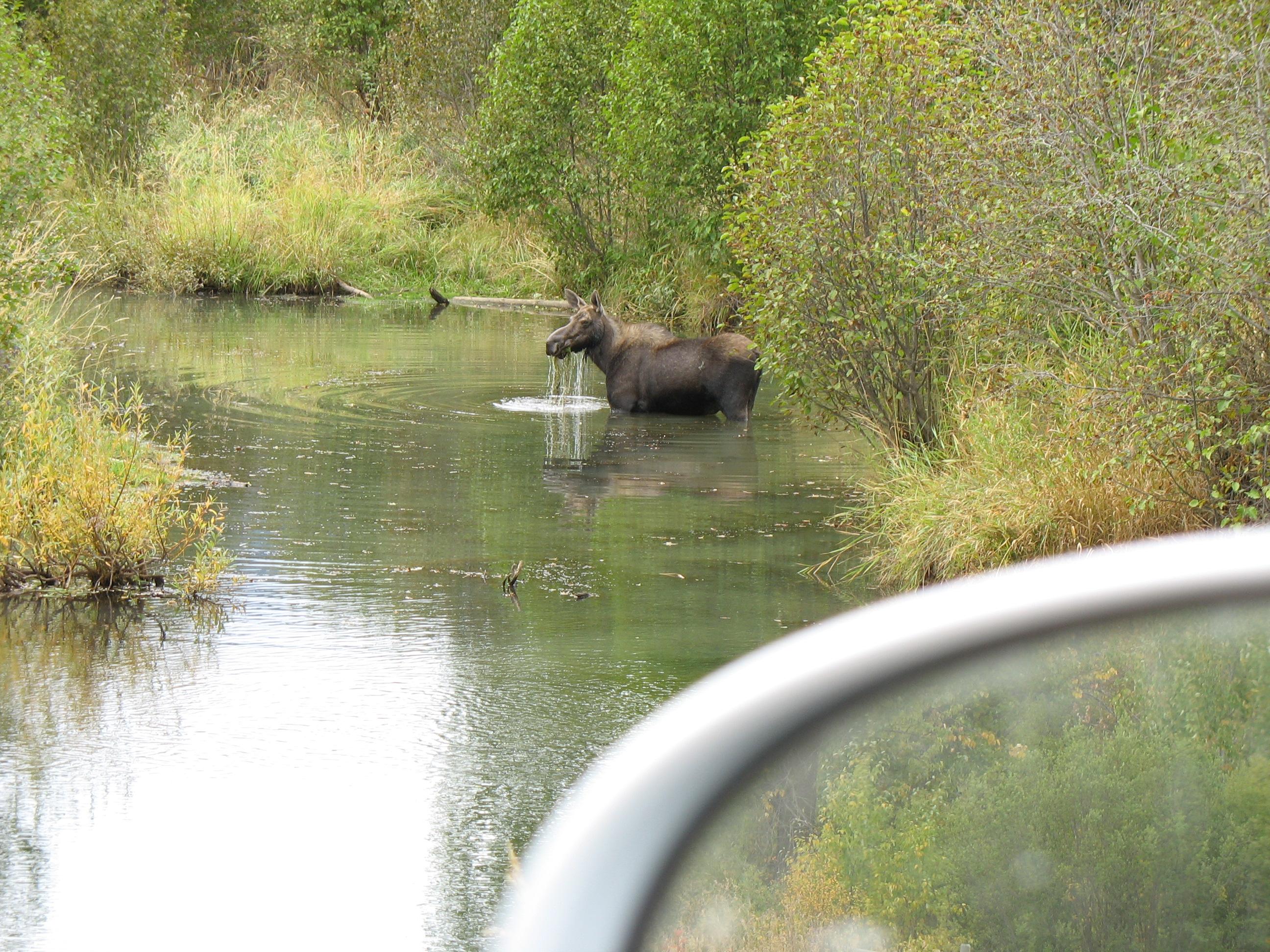 moose-links