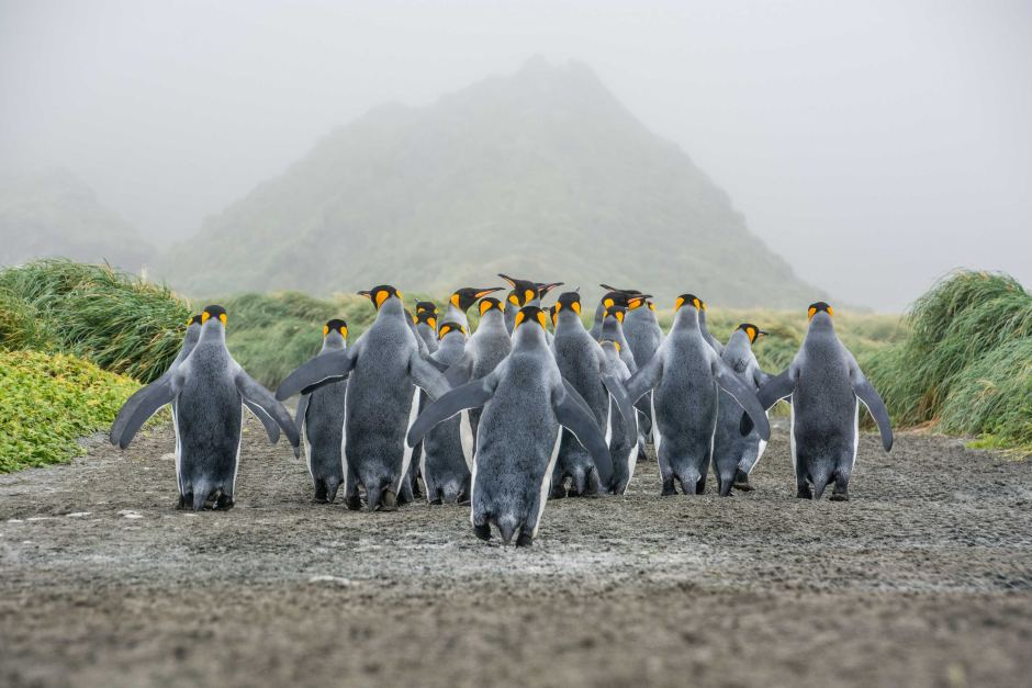 penguins-parading-links