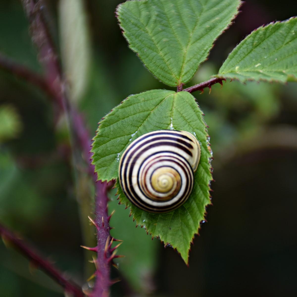 pretty-snail-lnks