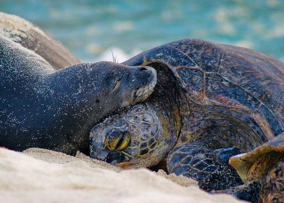 seal-turtle-love-links