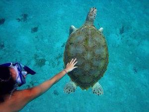 turtle_300