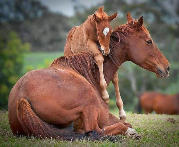 mare-and-foal-links