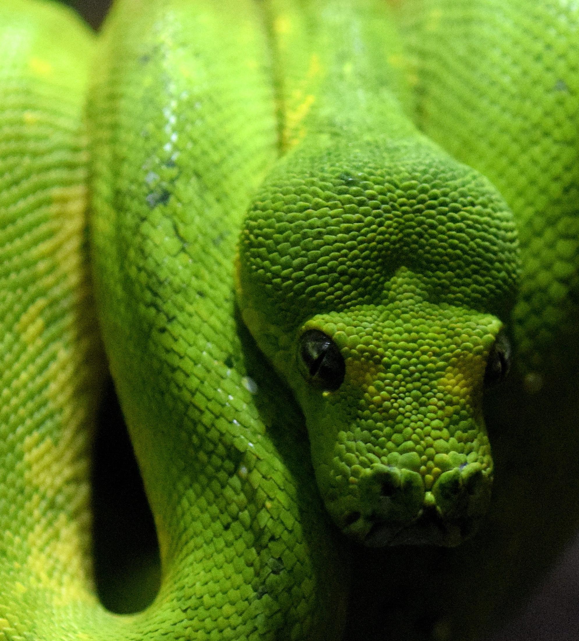 pretty-snake-links