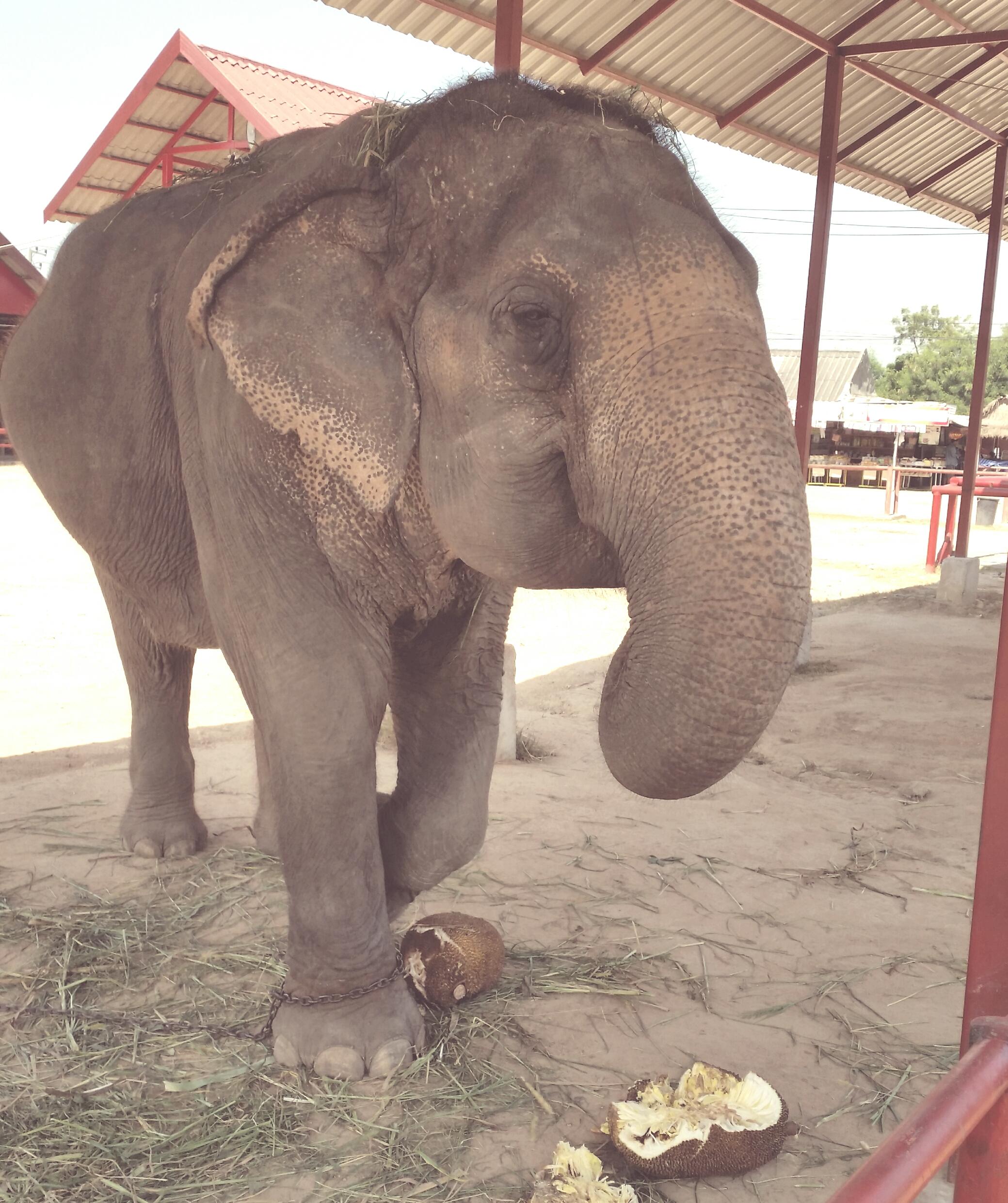 furzy elephant linkw