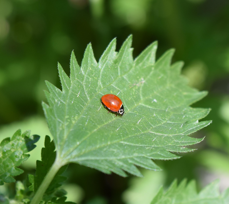 ladybug-links