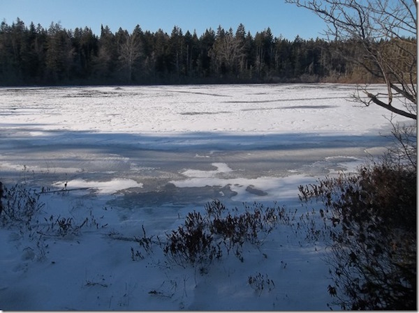 otter_pond